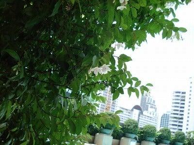 はちのアジア旅ノート-バンコク
