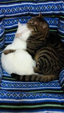 愛猫は糖尿病