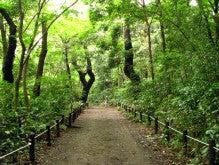 MotherShipのキラキラ☆日記-自然教育園
