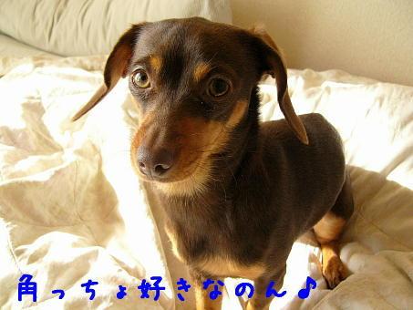 hamonics*ぷらす-matamoya