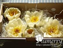 Plumerry(プルメリー)プリザーブドフラワースクール (千葉・浦安校)-water lilly