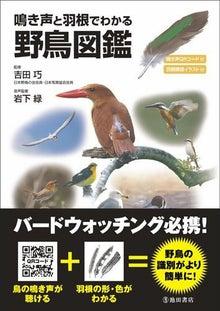 タクミの野鳥ブログ-デジタルカメラで野鳥撮影-鳴き声と羽根でわかる野鳥図鑑
