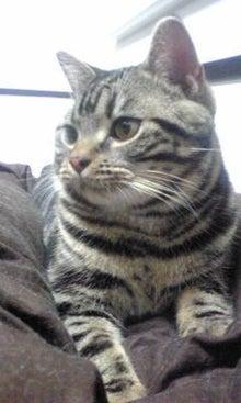 猫カフェ NYAON-Image264.jpg