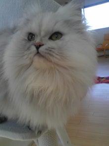 猫カフェ NYAON-Image726~00.jpg