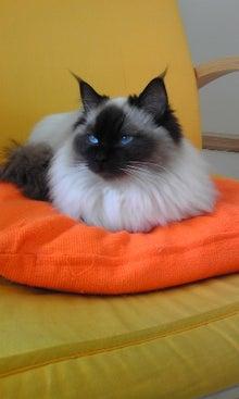 猫カフェ NYAON-Image1142.jpg