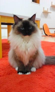 猫カフェ NYAON-Image082~01.jpg