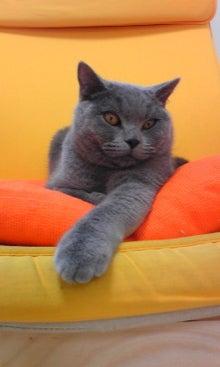 猫カフェ NYAON-Image843.jpg
