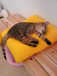 猫カフェ NYAON-Image563~00.jpg