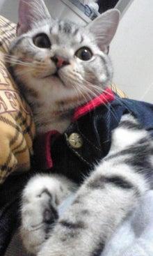 猫カフェ NYAON-Image017.jpg
