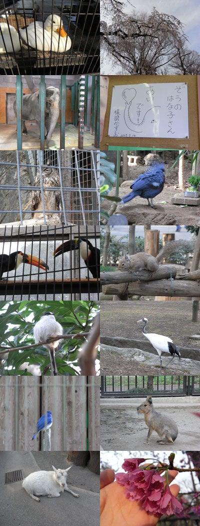 【たんぽぽの惑星】-井の頭動物園