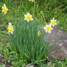 霧島で見つけた春の花…
