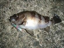Fishing Blog OFFSHORE CRAZY! ~ 夢は一発大物!   鮪だ!鰤だ!大政だ!巨カンパだ!大鯛だ!なんでもこ~い!-2010初メバル