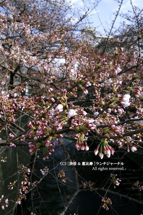 ●[渋谷&恵比寿] ランチ・ジャーナル-3
