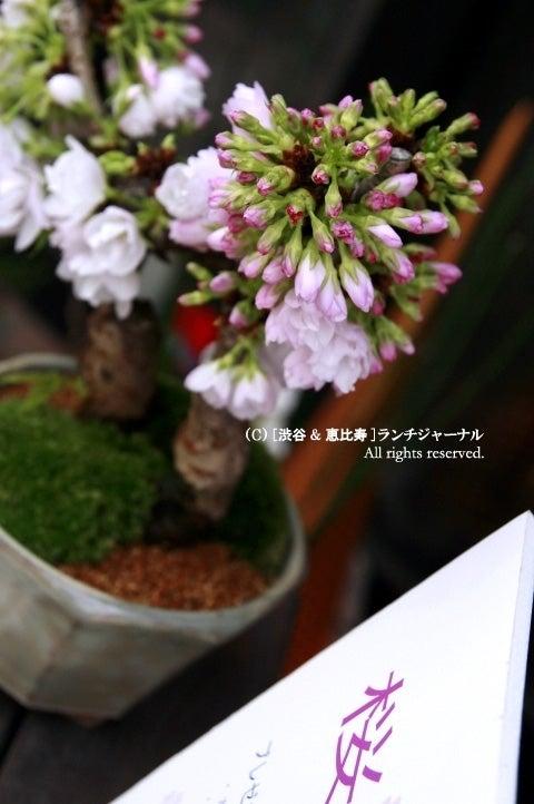 ●[渋谷&恵比寿] ランチ・ジャーナル-23