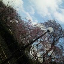 桜咲いたら1年生(°…