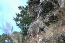 小笠原エコツアー 父島エコツアー         小笠原の旅情報と小笠原の自然を紹介します-ノスリの巣
