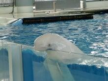 $へなちょこ日記-白イルカ