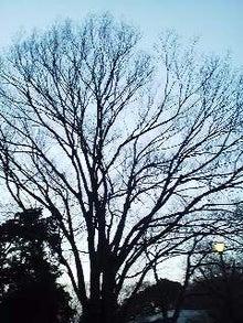 博多ホメホメ新聞-100320_1757~01.jpg