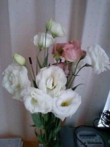 とろとろひとりごと-お花