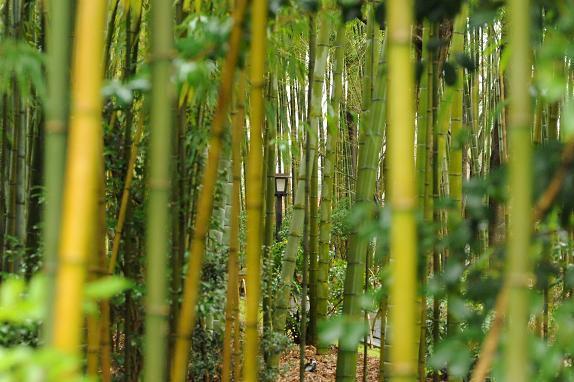 $神泉で働くマジシャンのblog-bamboo
