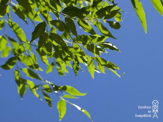 ケロケロの散歩道-青空