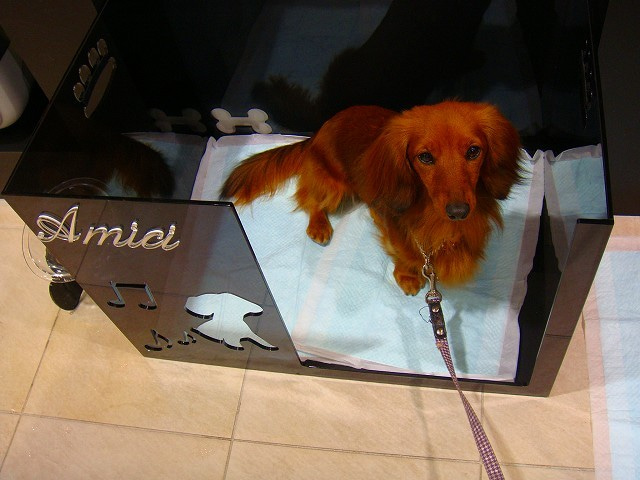 旅犬Lanileaのほほん風船記-Amici