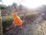 Akinaの癒しとアートな日々-CA3C00530001.jpg
