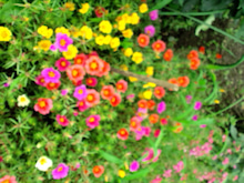 Akinaの癒しとアートな日々-CA3C0260.jpg