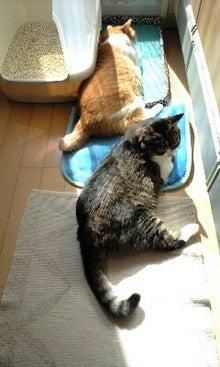 ずれずれブログ…湘南で猫と暮らせば…-100330_0859~0001.jpg