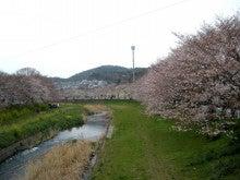 僕の毎日 そして過去-河原の桜
