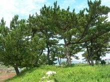 microcosmos B-池島57