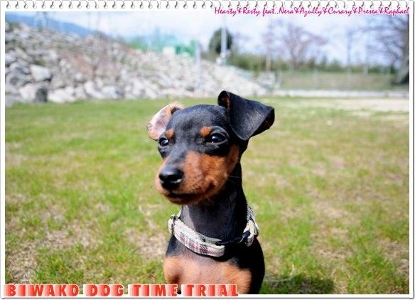 心優しい犬の癒し♪ ~Hearty&Resty♪...feat.Nera&Azully&Curary&Presea&Raphael♪~ from 滋賀びわ湖~