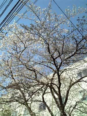 """夢野みさをの""""風の贈り物""""-花"""