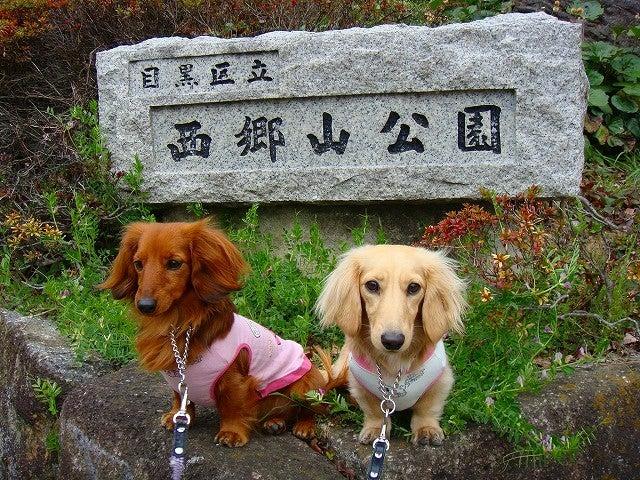 旅犬Lanileaのほほん風船記-目黒川