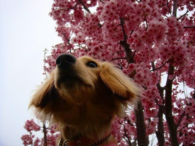 旅犬Lanileaのほほん風船記-西郷山