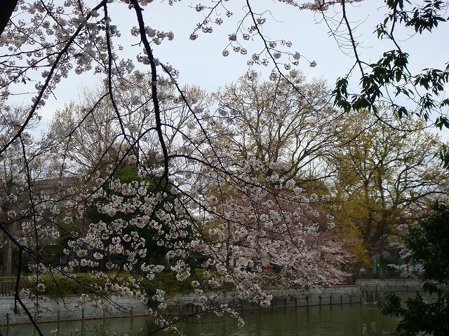 旅犬Lanileaのほほん風船記-碑文谷公園