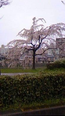 祇園の住人 お水編-100324_1345~02.jpg