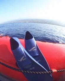 イルカ!御蔵・ハワイの画像で ほっ!癒しの旅、ネイチャーガイド~風の道~ブログ