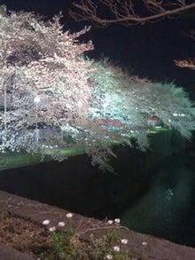 徒然日記-桜2010