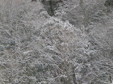 夫婦世界旅行-妻編-降りしきる雪