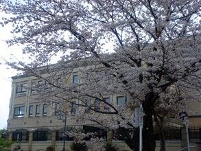 流れゆくままに-桜