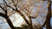 関西人の暇やから日記書きます!-2010年 桜
