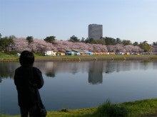 ひろしのブログ-岡崎桜まつり1