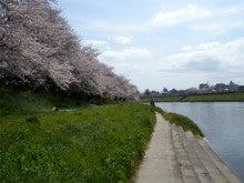 ひろしのブログ-岡崎桜まつり7