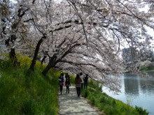 ひろしのブログ-岡崎桜まつり5