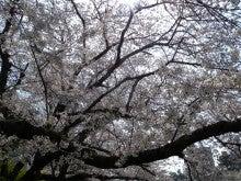 ひろしのブログ-岡崎桜まつり6