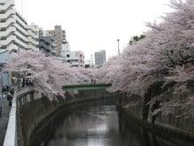 「ステュディオス」な生活-江戸川橋の桜