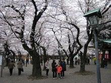 「ステュディオス」な生活-満開の桜