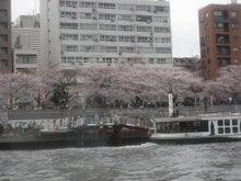 ワークライフバランス 大田区の女性社長日記-桜