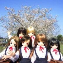 桜咲いてたよ。
